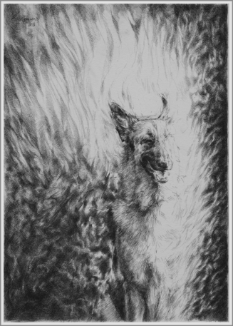 Omnia Vincit (Burning Dog V)